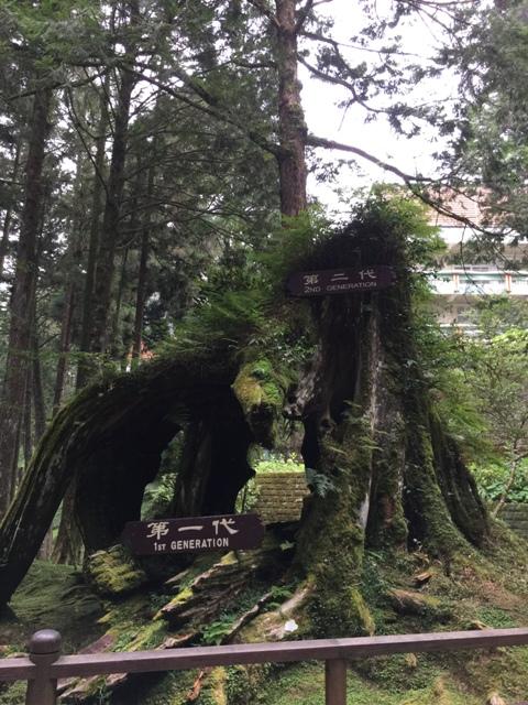 阿里山三代木