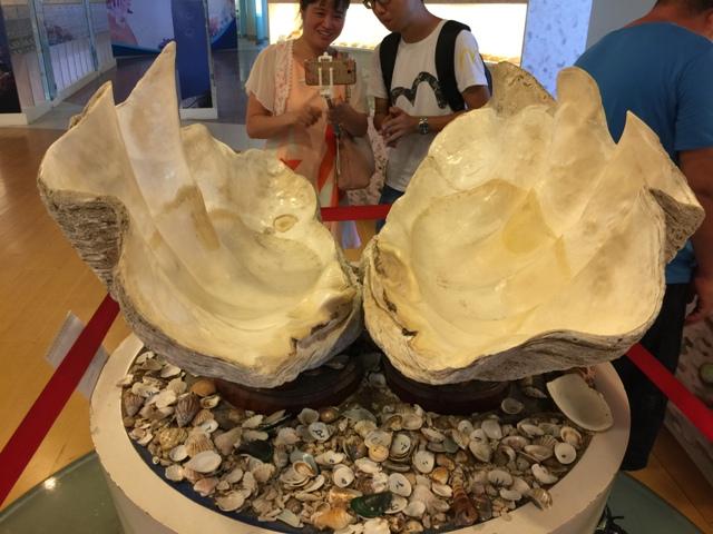 高雄贝壳博物馆2
