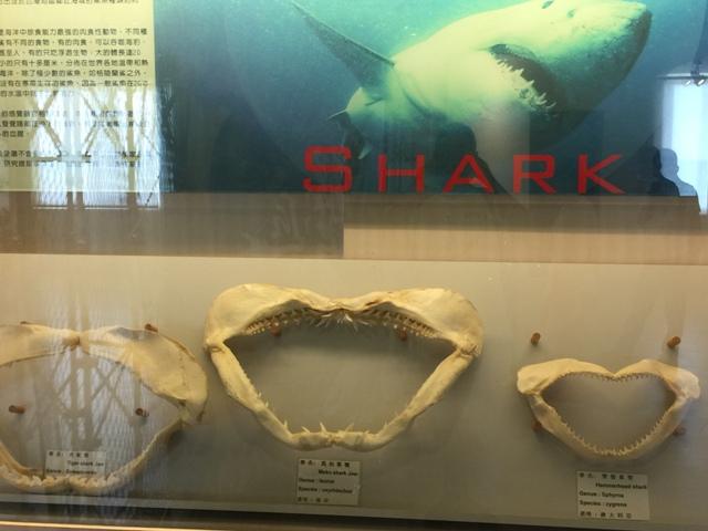 高雄贝壳博物馆3