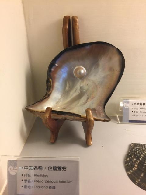 高雄贝壳博物馆1