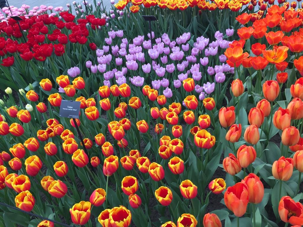 荷兰郁金香公园