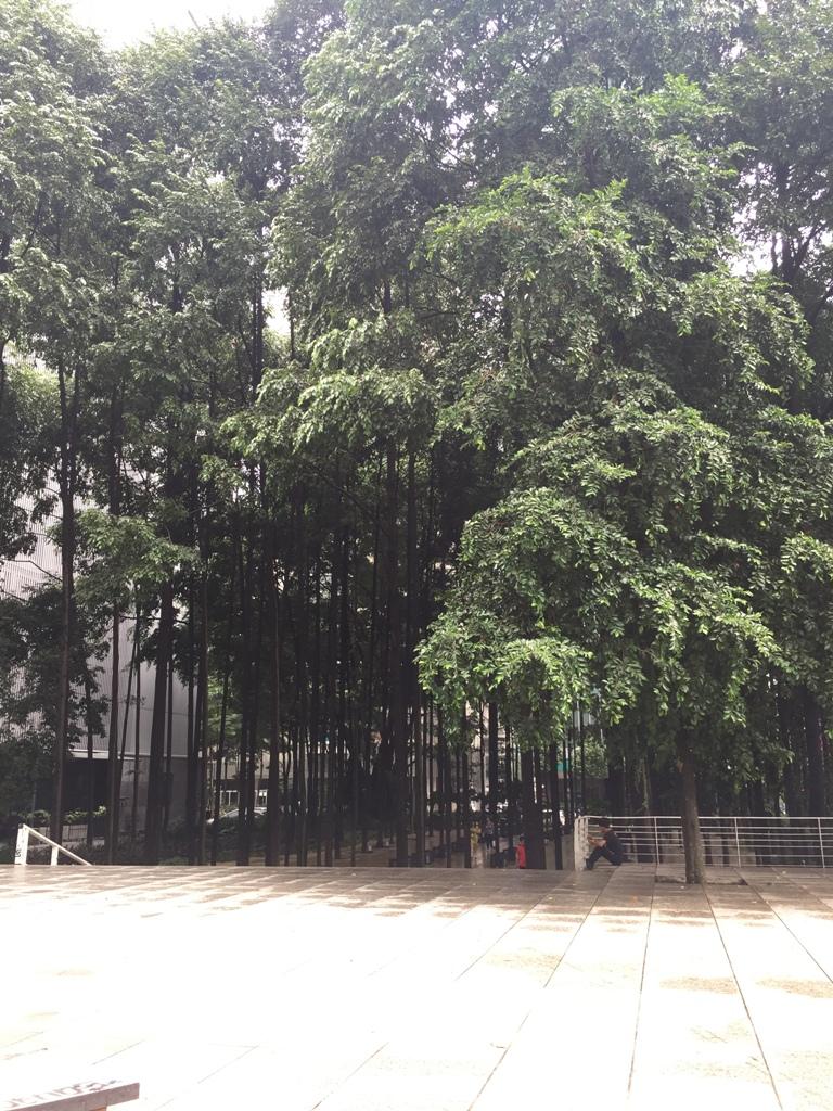 双子塔旁的小树林